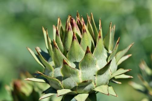 Plantas que ayudan a nuestro sistema depurativo
